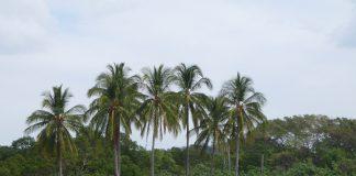 Costa_Rica_2009_043